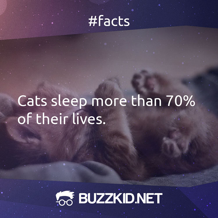 cats sleep more than 70 percent of their lives