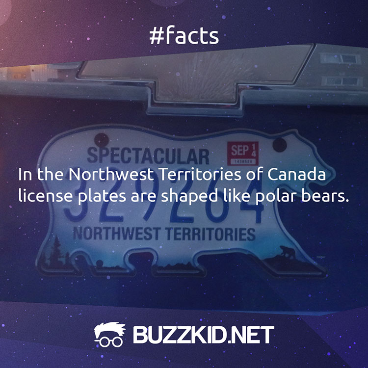 There are polar bear shaped license plates in Canada
